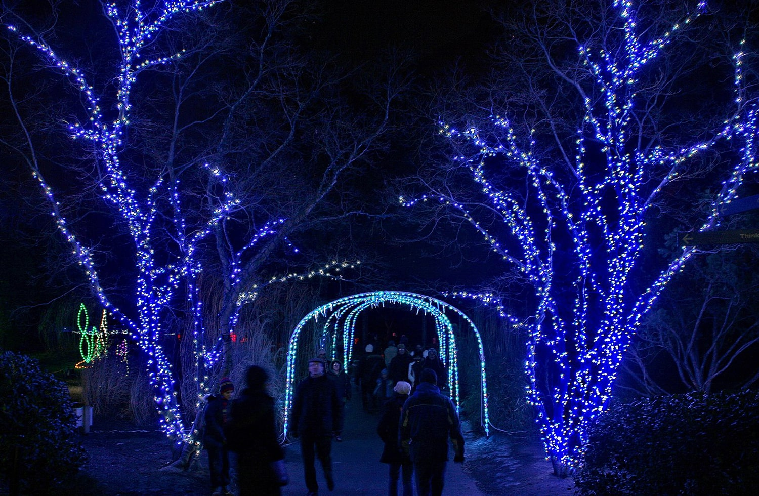 people walking at night through blue christmas lit trees